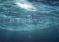 """Film """"Hybrids"""" – jaka przyszłość czeka oceany? – video"""