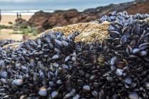 Mikroplastik znaleziony w owocach morza