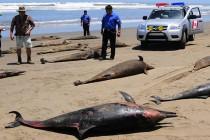 3000 martwych delfinów na wybrzeżu Peru