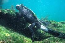 Wyspy Galapagos kryją znacznie więcej morskiego życia niż przypuszczano