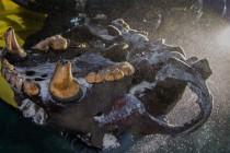 Niezwykłe prehistoryczne drapieżniki odnalezione w zalanej jaskini! – video
