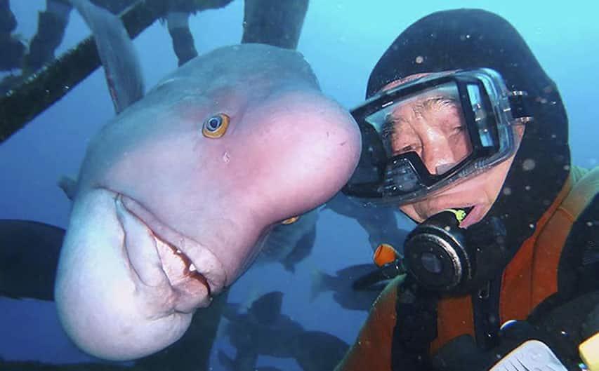 diver-fish-25-year-friendship-hiroyuki-arakawa-japan-594cc54583ae1__700