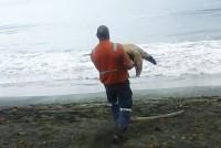 Mężczyzna kupuje żółwie z rynku i uwalnia do oceanu