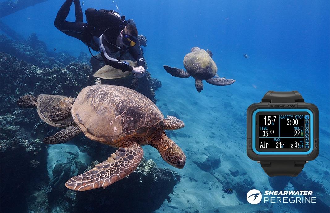 żółwie i komputer nurkowy Shearwater Peregrine divers24.pl