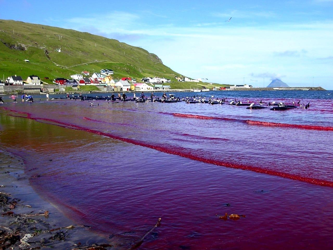 wody zatoki wypełnione krwią po Grindgrap divers24.pl