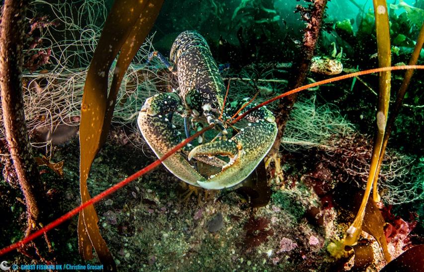 homar zaplątany w sieć Hand Deeps Plymouth divers24.pl