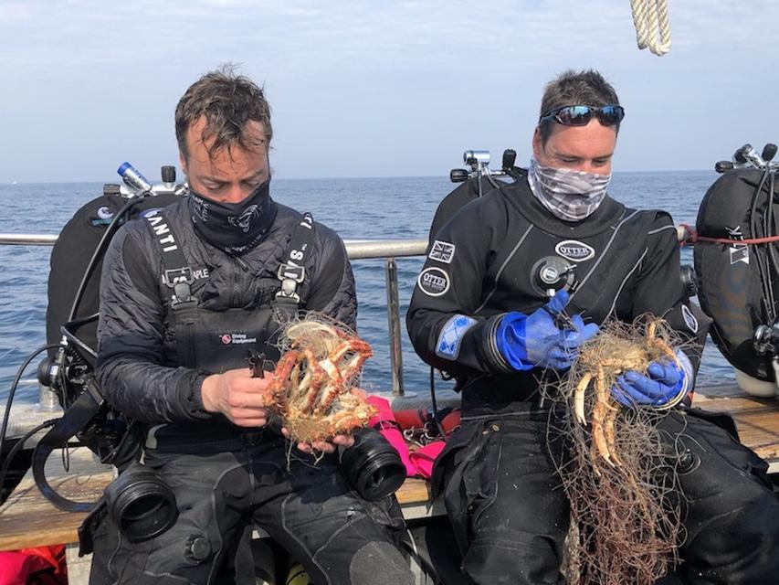 Wycinanie zaplątanych zwierząt z sieci divers24.pl
