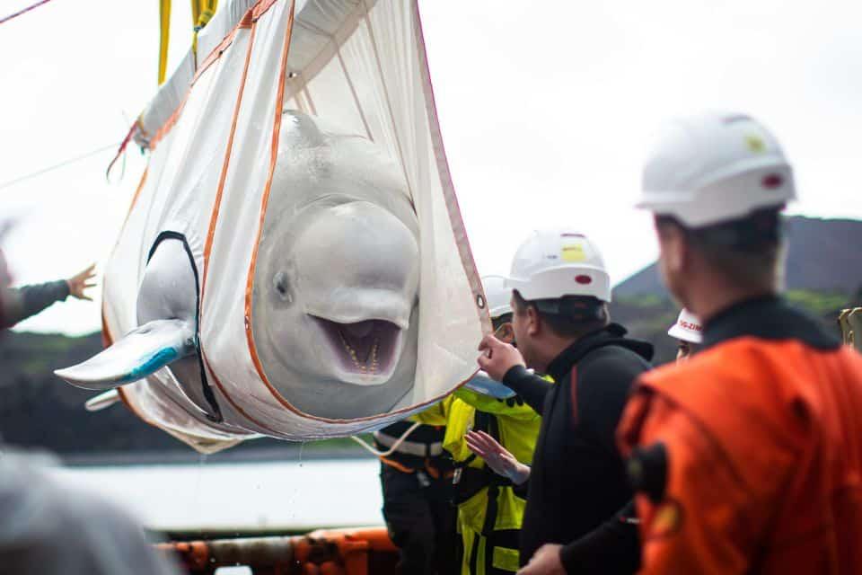 transport białuch w specjalnej uprzęży divers24.pl