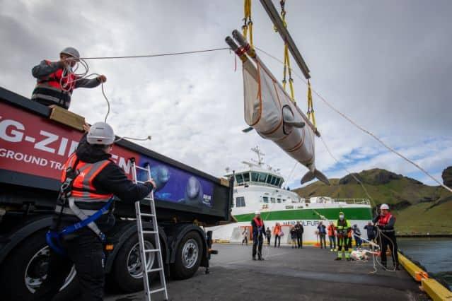 Białuchy przetransportowano do Islandii divers24.pl
