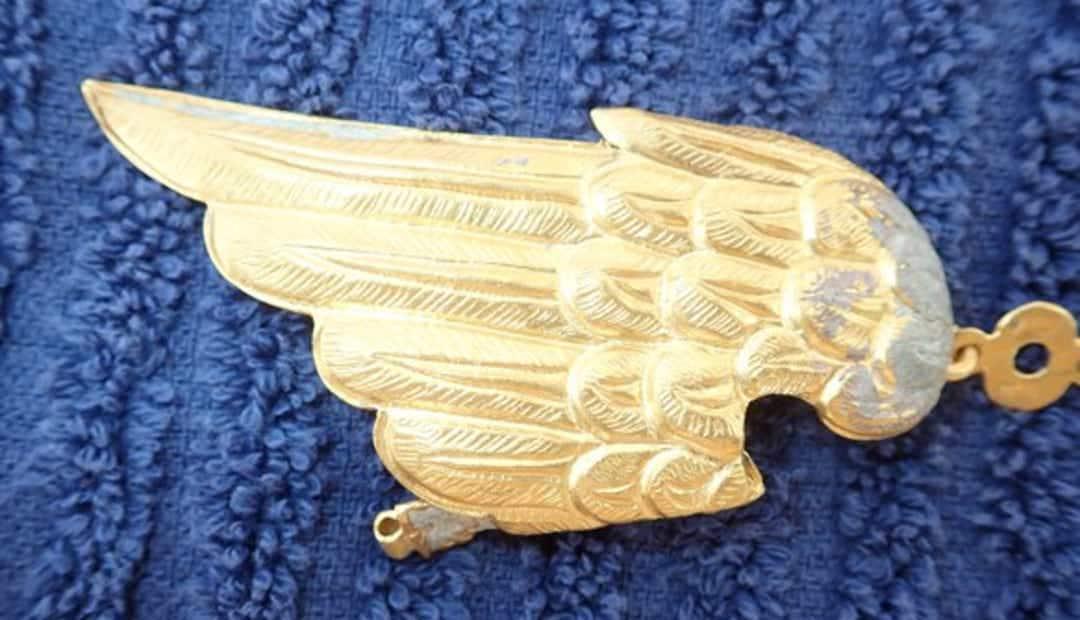 Skrzydło złotego pelikana odnalezione na Florydzie 1715fleetsociety divers24.pl