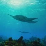 film przyrodniczy Hidden Pacific divers24.pl