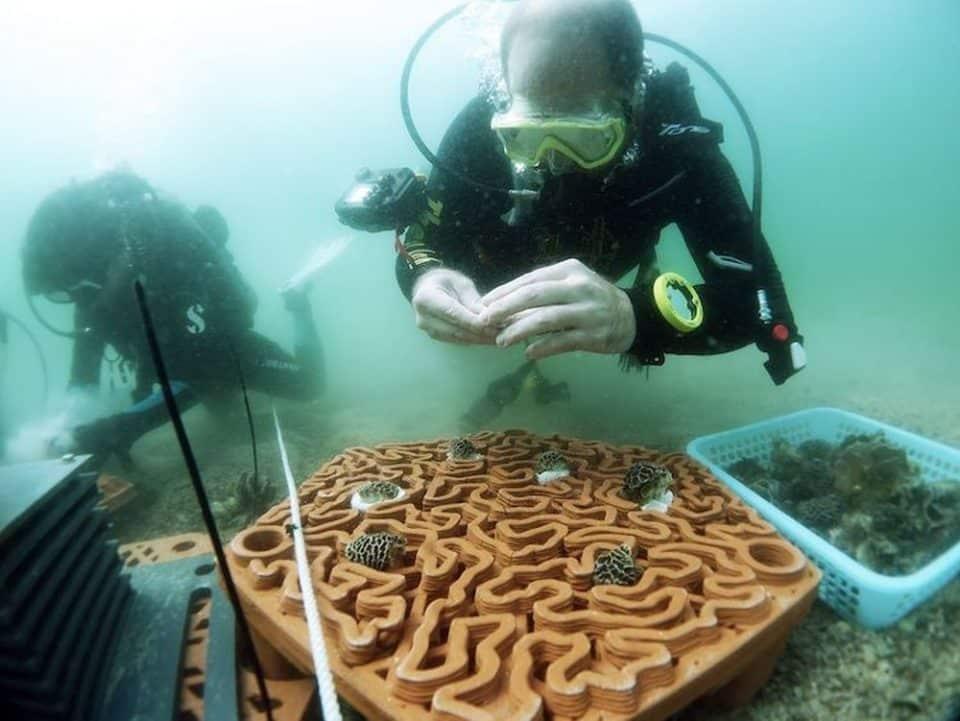 Sadzonki umieszczane na płytkach 3D University of Hong Kong divers24.pl