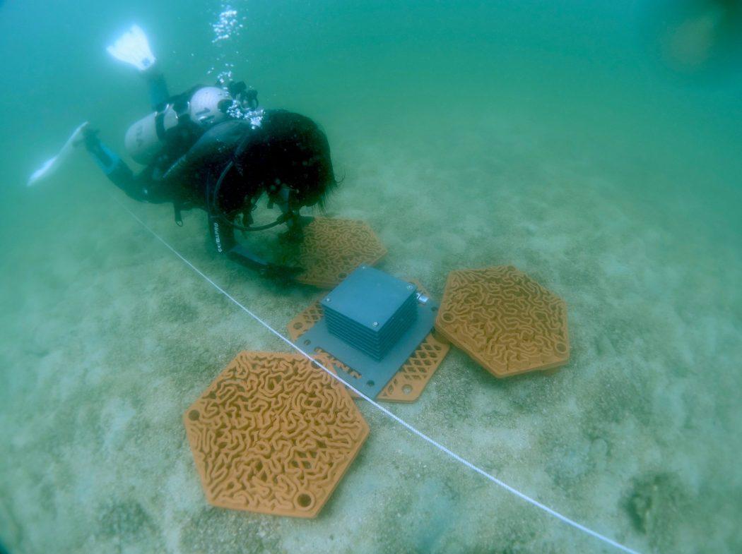 Płytki rafowe 3D ustawiane na dnie University of Hong Kong divers24.pl