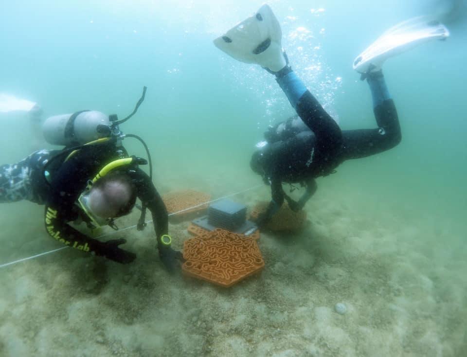 Ustawianie płytek rafowych na dnie University of Hong Kong divers24.pl