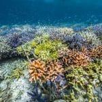 Program odbudowy raf Coral Guardian divers24.pl