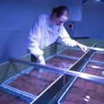 projekt sadzenia trawy morskie National Marine Aquarium divers24.pl