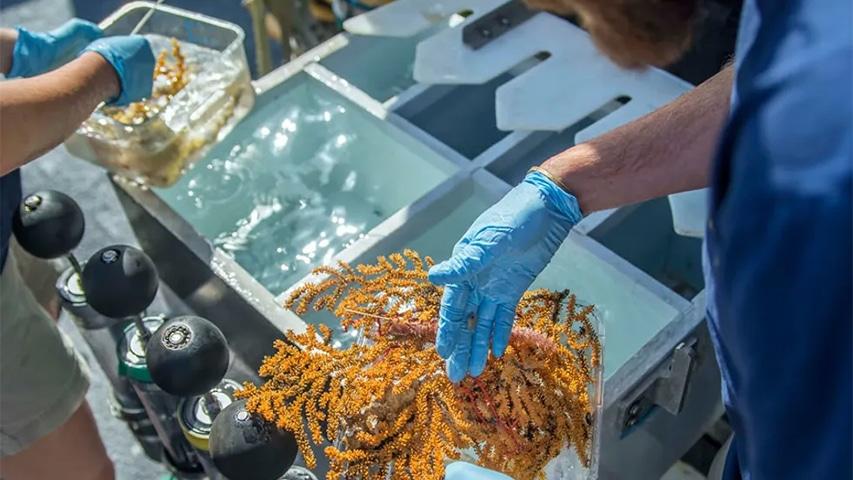 Nowe gatunki morskie na Galapagos