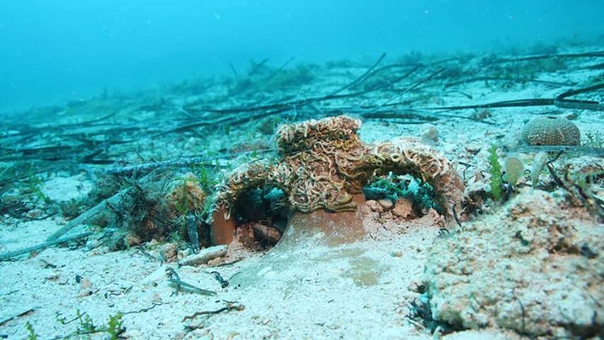 starożytna amfora zakopana w dnie Hvar