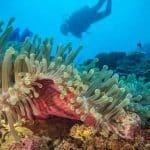 Sanktuarium koralowców wschodnia Afryka