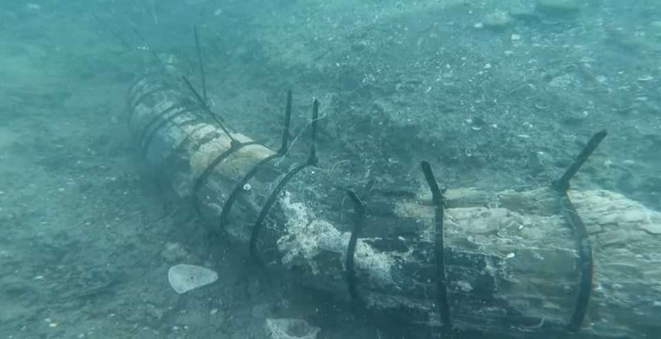 Zatoka Meksykańska skamielina mamuta kolumbijskiego