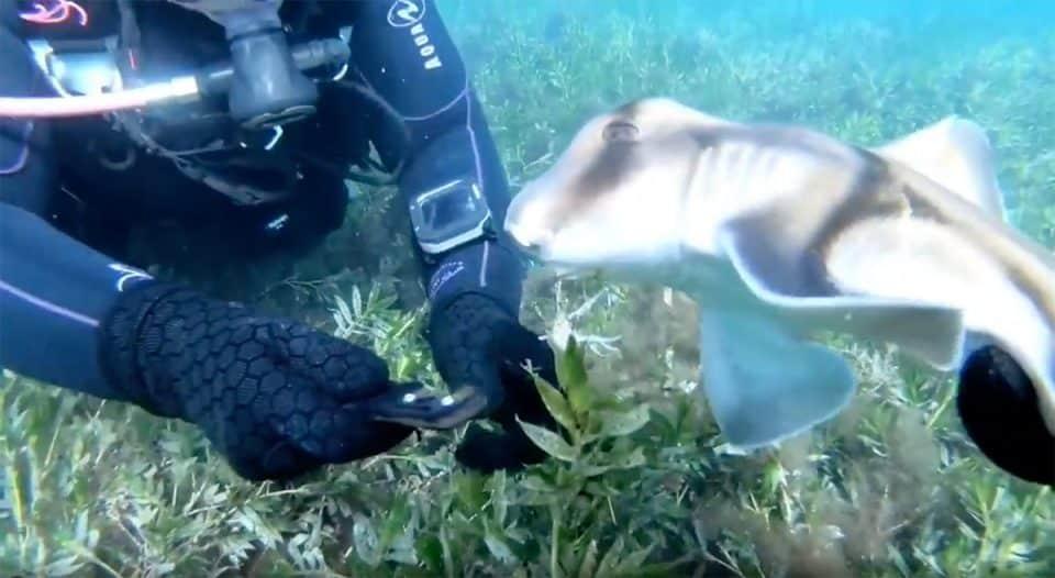 rekin uwalniany przez nurka