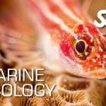Certyfikat specjalizacji Marine Ecology SSI