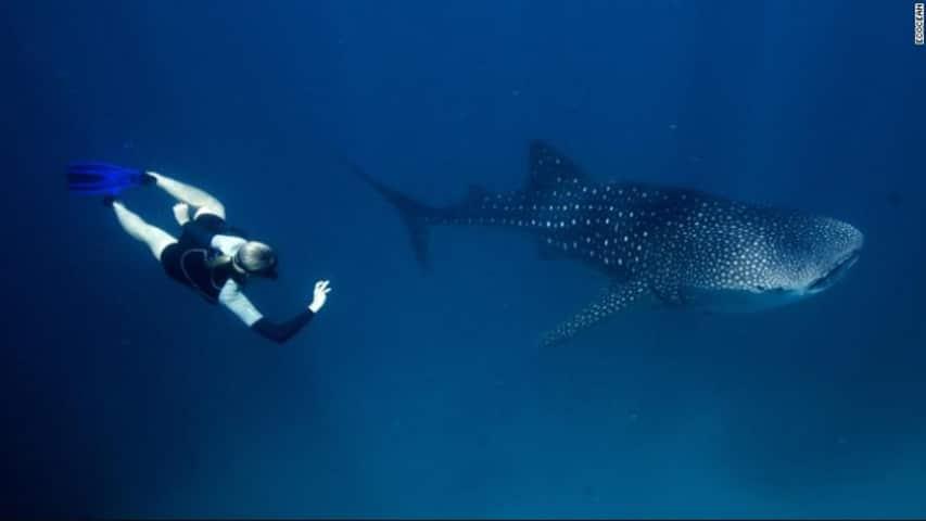 nurkowanie z rekinem wielorybim