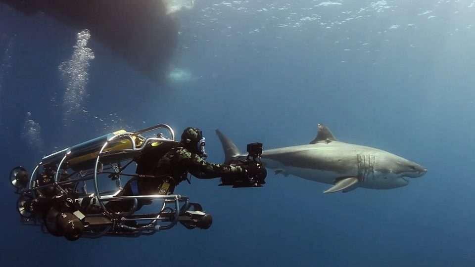 nurek filmujący rekina z klatki