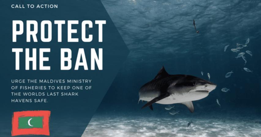 ochrona rekinów na Malediwach