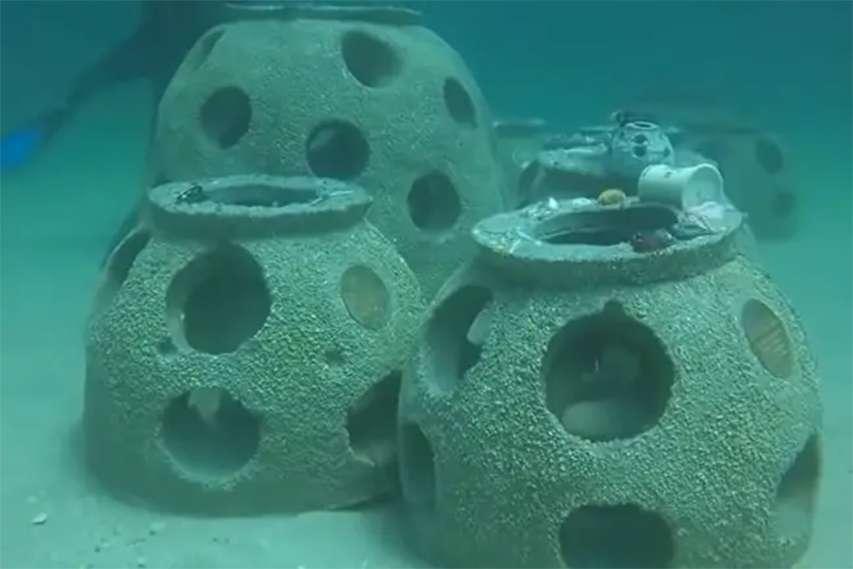odbudowa rafy koralowej floryda