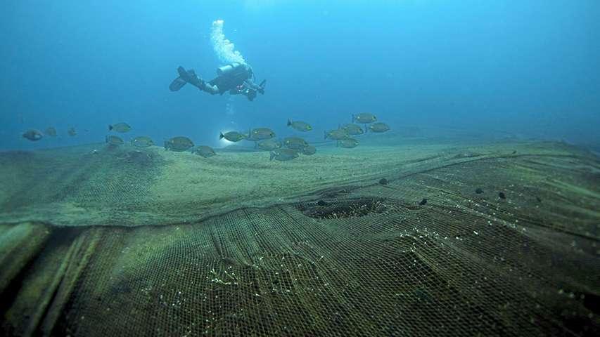 nurek płynący nad zerwaną siecią rybacką