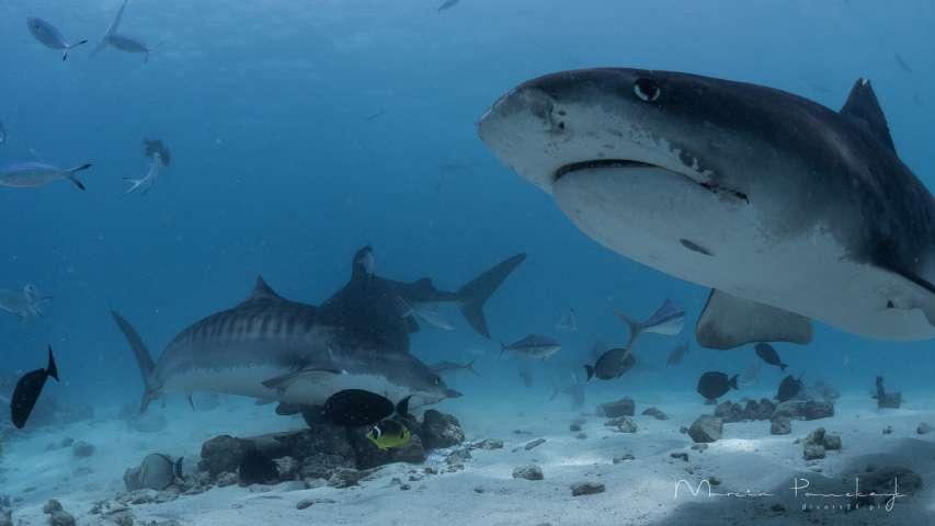 zakaz handlu płetwami rekina w USA
