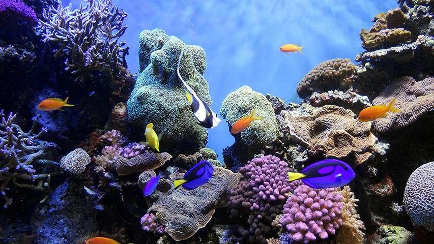 ochrona raf koralowych w Tajlandii