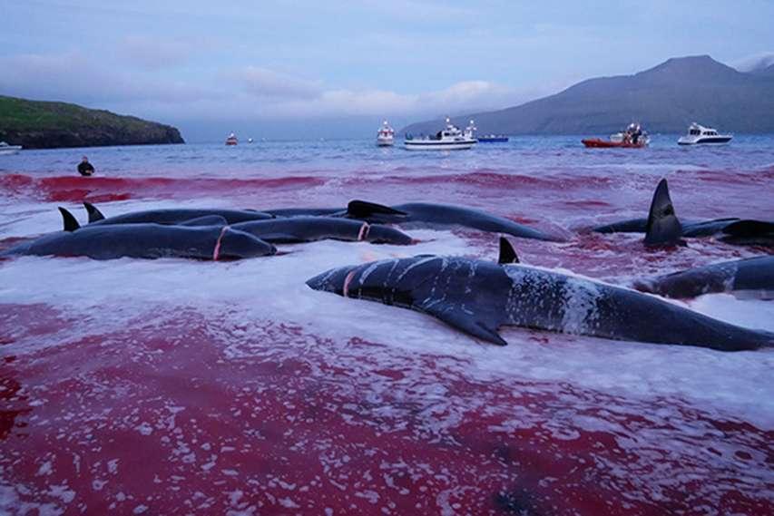 Zatoka pełna martwych delfinów